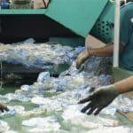 Circulate-Capital—PET-recycling