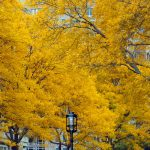 indian-summer-in-boston-new-england-travel-usa_t20_e8Rkx2
